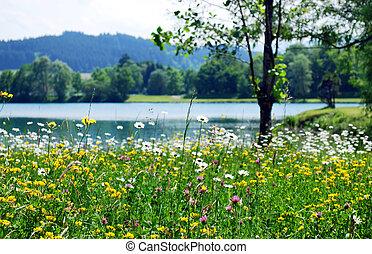 春天, 草地