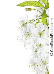 春天, 邊框, 花