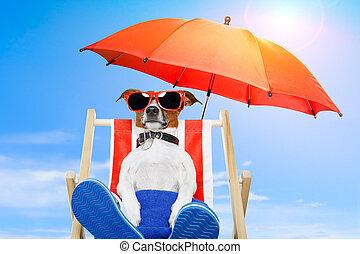暑假, 狗, 假期