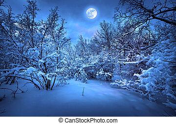 月光, 木頭, 冬天, 夜晚