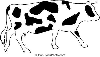 有斑點, 黑色半面畫像, 矢量, cow., illustration.