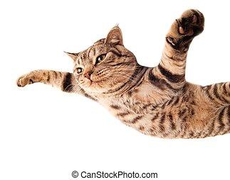 有趣, 飛行, 小貓