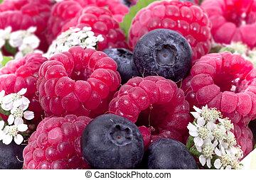 木莓, 框架, 烏飯果, 充分, 成熟
