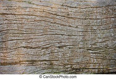 木 紋理, 背景, texture/wood