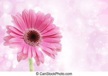 桃紅色 花, gerbera
