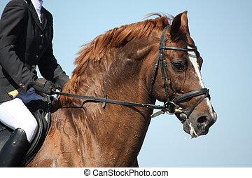 棕色的馬, 給予, 在期間, 肖像, 運動