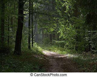 森林, 路