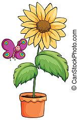 植物罐, 向日葵