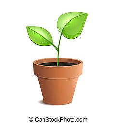 植物罐, 年輕, 被隔离, 矢量, 綠色, backgrounds., 白色