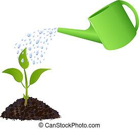 植物, 上水, 綠色, 年輕, 罐頭