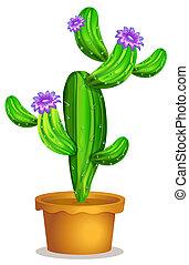 植物, 仙人掌, 罐