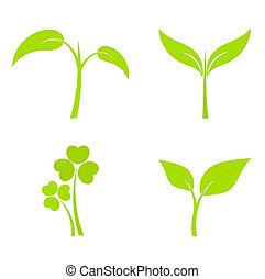 植物, 圖象