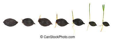 植物, 序列, 被隔离, 棕櫚, 生長, 白色