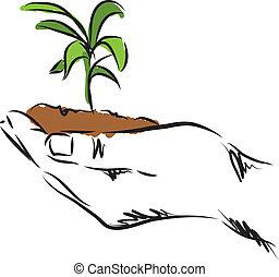 植物, 手, 插圖, 懸挂