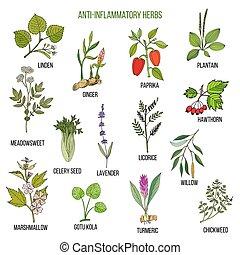 植物, 手, 畫, 集合, anti-inflammatory, 藥品, herbs.