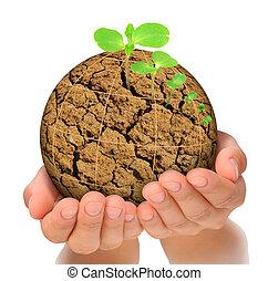 植物, 概念, 演化, 行星, 烘, 生長, 手, 在外