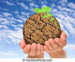 植物, 演化, 概念, 行星, 烘, 生長, 手, 在外