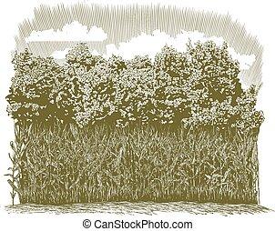 植物, 玉米, 木刻