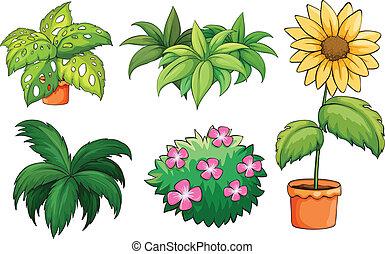 植物, 花盆