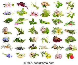 植物, 藥品, set., 被隔离