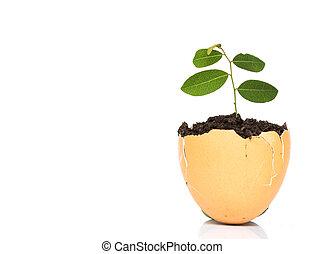 植物, 蛋殼, 生長, 生活, 白色, 綠色, 新, 背景。, 很少, 概念