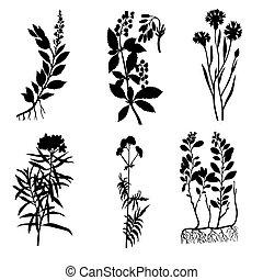 植物, 黑色半面畫像, 矢量, 背景, 藥品, 白色