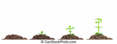 概念, 過程, soil., isolated., 成長, 綠色, 計劃, 生長