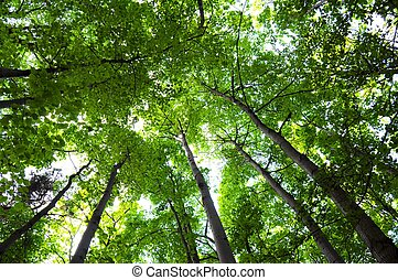 樹林, 樹