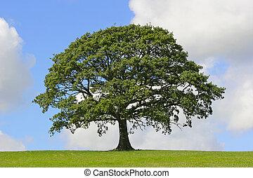 樹, 符號, 力量, 橡木
