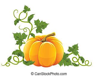 橙, 成熟, 蔬菜, 南瓜