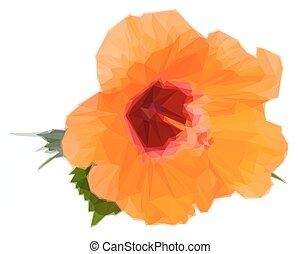 橙, 芙蓉屬的植物, 花