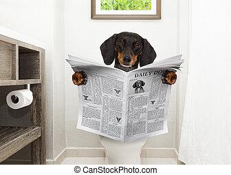 洗手間, 報紙, 座位, 狗, 閱讀