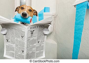 洗手間, 座位, 狗