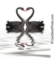 浪漫史, 天鵝, 黑色