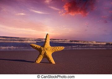 海灘, 傍晚, starfish