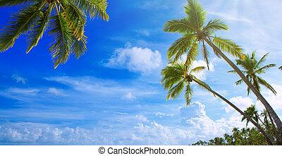 海灘。, 旅行, 樹, 熱帶, 背景。, 棕櫚