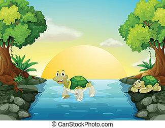 海龜, 微笑, 河
