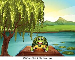 海龜, 池塘, 微笑, 向前