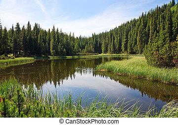 湖, 山, 森林, 夏天