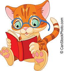 漂亮, 教育, 小貓