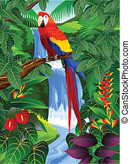 熱帶的森林, 鳥