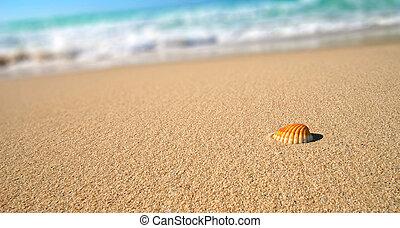 熱帶, 殼海灘, 海