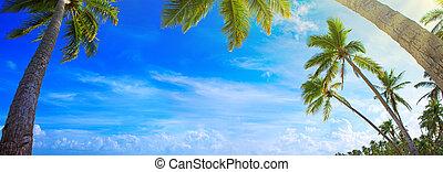 熱帶, 海灘。, 棕櫚樹