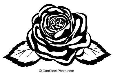 特寫鏡頭, 摘要, rose., 被隔离, 黑色的背景, 白色