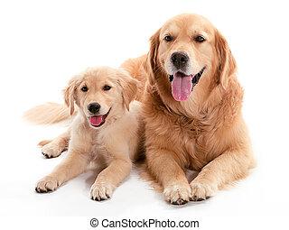 狗, buddys