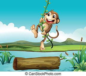 猴子, 搖擺