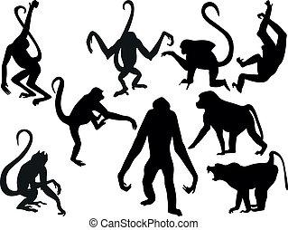 猴子, 黑色半面畫像, -, 收集, 矢量
