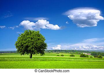 環境, 綠色