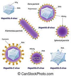 病毒, eps10, 肝炎, 比較