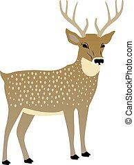 矢量, 漂亮, deer., 插圖